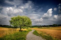 FIELD SKY TREE