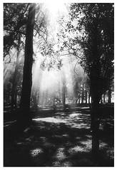 Lux (VanMagenta) Tags: santa brazil bw luz paran brasil flickr canoneos30 trix magenta pb van santacatarina catarina palmas vanmagenta