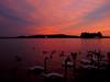 Memories of a volcano (kenyai) Tags: sunset red lake water port lago swan aqua tramonto swans porto acqua rosso balaton cigni tihany plattensee cigno balatonfüred interestingness63 i500 abigfave kikötô hattyu