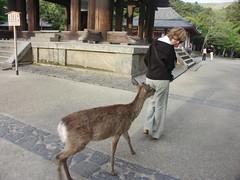 Sightseeing Nara, Japan (skruk) Tags: japan nara budda deers mdm2006 greatbudda