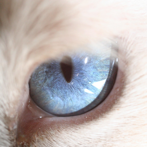 The Amazing World Of Cat S Eye Macro Photography
