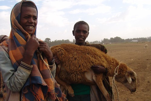 Bahir Dar shepherds - eight
