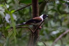 (shahin olakara) Tags: forest wildlife shahin silentvalley limelite olakara shahinolakaracom