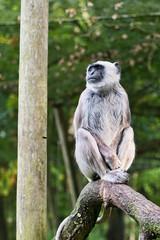 Monkey (Amren1985) Tags: tree four monkey olympus 45 panasonic micro ape third 18 thirds gx7