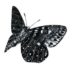 Star Moth 2 (Helen Ahpornsiri) Tags: art illustration graphic drawing moths
