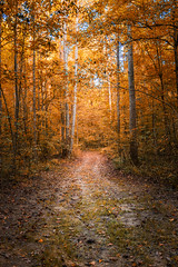 Hello Autumn (Elizabeth_211) Tags: autumn trees fall nature forest path tennessee 6d jacksontn 24105mm westtn sherielizabeth