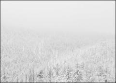 . (OverdeaR [donkey's talking monkey's nodding]) Tags: trees winter bw mountain fog pine clouds landscape sony surreal highkey nikkor sonya blizzard a7 f25 ais divcibare 105mm snowblind 10525 divibare maljen metabones