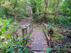 Watershed Bridge (Jae at Wits End) Tags: wood bridge autumn plant tree green fall nature colors field grass leaves architecture stairs rural america way season landscape outside leaf illinois still woods midwest quiet exterior view natural outdoor path country flight steps lawn smooth scenic restful peaceful calm structure foliage route sidewalk trail staircase american walkway infrastructure vegetation serene relaxed picturesque grounds tranquil turf pathway sod gentle soothing edwardsville treads