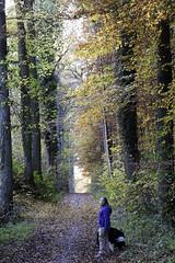 IMG_3194-Modifier (mycenium) Tags: wood mushroom canon belgium region foret brabant champignon bois 6d wallon wallonie wallone belgiquie