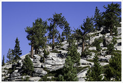 Olmstead Point (karith) Tags: trees mountain landscape yosemite olmsteadpoint karith 9000feetplus
