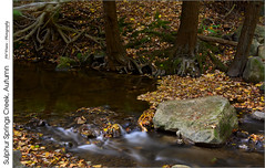 Sulphur Springs Creek, Autumn (jwvraets) Tags: autumn fall leaves creek forest woods nikon stream roots gimp niagara rapids stcatharines opensource effingham fallcolours niagaraescarpment d7100 rawtherapee nikkor18105mmvr sulphurspringscreek