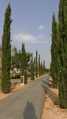 S1880049 (maa) Tags: israel zypressen israelreise arielsharonpark kkljnf kheiriya