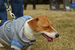 """Dogs, dog park, richmond • <a style=""""font-size:0.8em;"""" href=""""http://www.flickr.com/photos/31682982@N03/22535114651/"""" target=""""_blank"""">View on Flickr</a>"""