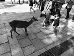 I made a new friend! (giu_vsc) Tags: park trip travel nature japan kyoto sony deer solo childrens osaka nara rx100 rx100m3