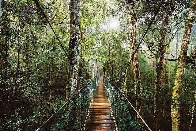 オライリーズとラミントン国立公園(国立公園のオプショナルツアー)