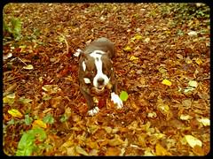 Darcey will not keep still! (Mark Hobbs@Chepstow) Tags: cameraphone camera dog wales train photography nikon ship d750 fullframe fx chepstow monmouthshire hgv d7100 markhobbs