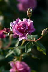 20151024-142846_yokohama-english-garden (t.nanba) Tags: jp