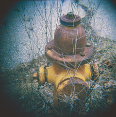 Rusted Over Growth (H o l l y.) Tags: road old urban film nature yellow analog hydrant vintage square fire lomography rust pavement retro diana indie 120mm abaondoned
