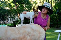 DSC_0014 (RUMTIME) Tags: lady yard garden donkey queensland coochie coochiemudlo