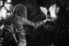 Peace (Michael Wögerbauer) Tags: pigeon prahaprag streetphotography tauben vogel leicam9 summicron75asph blackandwhite blackwhite schwarzweiss schwarzweis noiretblanc