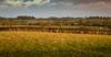 Meridian and farmland (Peter Leigh50) Tags: leicestershire wistow road kibworth meridian train railway