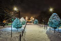 Boston Christmas Snowy Night (jlucierphoto) Tags: christmas holiday snow lites trees outside outdoor city boston massachusetts