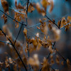 Thicket Details 021 (noahbw) Tags: captaindanielwrightwoods d5000 dof nikon abstract blur branches depthoffield forest leaves natural noahbw square winter woods
