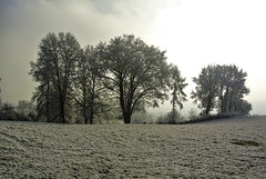 A beautiful winter day awakes (Kat-i) Tags: neujahrstag2017 raureif bäume trees winter schnee snow himmel sky wiese meadow hoarfrost morgenlicht morninglight nikon1v1 kati katharina 2017