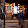 (edwardlepine) Tags: cat ginger orange stairs ndg relax outdoor film analog e6 mediumformat hasselblad 2016 november goldenhour cranky sleep feline