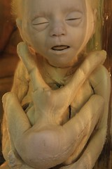 IMG_2228 (anthrax013) Tags: saint petersburg kunstkamera anatomy science medicine dead baby death necro necrophilia corpse abortion formalin