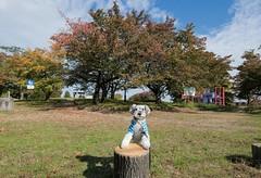 桜の木 (photojiro) Tags: 10月 fujifilmxpro2 fujifilm fujinon xf1024mmf4rois テオ 撮って出し 晴れ 秋 長野運動公園 ジャングルジム 紅葉