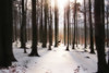 Peaceful Winter Day (AlicePopkorn) Tags: winter forest trees snow deer wald schnee reh creativecommons alicepopkorn