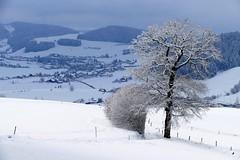 Winter: Oberhalb Grosshöchstetten (Martinus VI) Tags: grosshöchstetten möschberg winter winterlandschaft hiver schnee nieve snow neige kanton de canton bern berne berna berner bernese schweiz suisse svizzera suiza switzerland y150222 martinus6 martinusvi