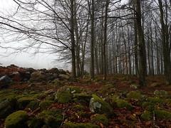 Promised to publish one photo every day of this beech forest  #FS170122  #lofte #fotosondag #mjölkalånga (pernillarydmark) Tags: mjölkalånga lofte fs170122 fotosondag bokskog