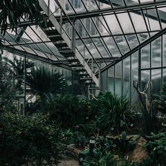 (matthiaswerner) Tags: hamburg plantenundblomen tropenhaus tropical house plants pflanzen glashaus conservatory greenhouse grün green canon sigma 35mmart