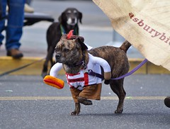 (lcross4) Tags: costume asbury park st patricks parade 2017 festhalle biergarten dog