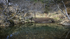 troll skog ;) (lunaryuna (off to the Lofoten)) Tags: iceland southeasticeland landscape skaftafell nature trees pond trollskog imagination heretherebetrolls lunaryuna