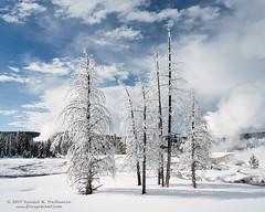 Rime Ice (dtredinnick13) Tags: yellowstone yellowstonenationalpark trees rimeice winter winterphotography winterlandscape wintertrees landscape landscapephotography snow frost ice nature naturephotography wyoming nikon nikond800
