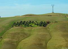 Scorcio nelle Crete Senesi (Darea62) Tags: landscape tuscany nature waves trees cretesenesi clay acconadesert olive hills trellis country cultivation green agriculture