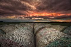 field1 (paulcummings72) Tags: nikon northumberland sigma wideangle landscape northeast d7200 sunset coast field redsky portrait manfrotto seatonsluice bales hay