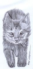 gato a lapicero (ivanutrera) Tags: draw dibujo drawing dibujoalapicero boligrafo animal sketch sketching gato gatito cat lapicero ilustracion dibujoaboligrafo