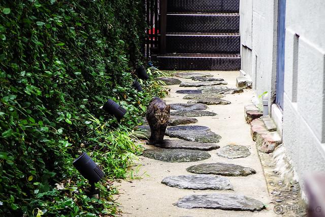 Today's Cat@2015-08-16