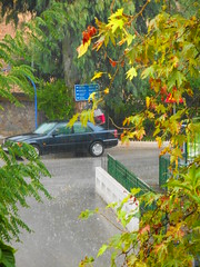 (Psinthos.Net) Tags: road trees storm water leaves car rain umbrella drops afternoon cloudy autumnleaves human eucalypt raindrops raining railings treebranches acacia wetroad planetree cloudiness     vrisi        rainingafternoon                       vrisiarea    vrisipsinthos