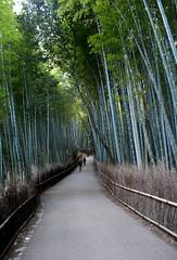 Arashiyama - Another World (Alonso Reyes) Tags: world heritage japan site kyoto grove bamboo unesco arashiyama nippon kioto kansai nihon honshu