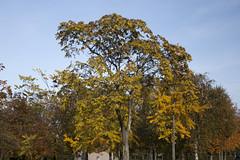 Floriade_251015_43 (Bellcaunion) Tags: park autumn fall nature zoetermeer rokkeveen florapark