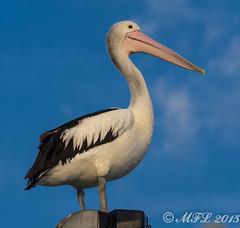 Wellington Point -290302.jpg (markl62) Tags: water sunrise jetty au australia olympus pelican queensland omd wellingtonpoint 40150