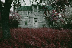 (emmakatka) Tags: old autumn trees red house abandoned nature grass leaves forest vintage dark blood alone decay creepy adventure explore derelict abandonment farmstead bloodred emmakatka