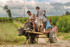 Moving Home (Beegee49) Tags: city family man lady walking children philippines riding cart silay carabao