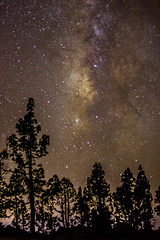 Milky way over Vilaflor, Tenerife (Jrmy Huynh) Tags: trees canon stars nightscape canarias tenerife milkyway