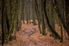 Autumn fallen leafs forest landscape (garmoncheg) Tags: november autumn trees fall forest landscape december fallen late leafs canon6d sigmaapodgef70300mmf4056